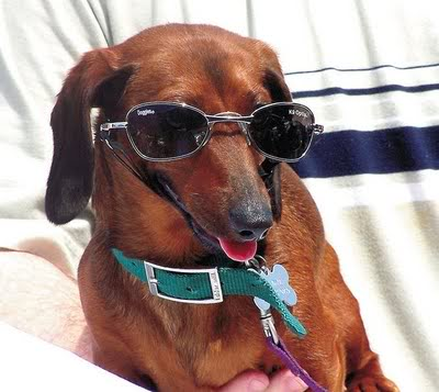 Happy Sunglasses Day!