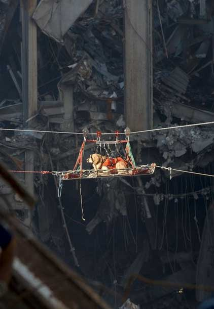 9/11 Remembered – Honoring The Heroic Dogs